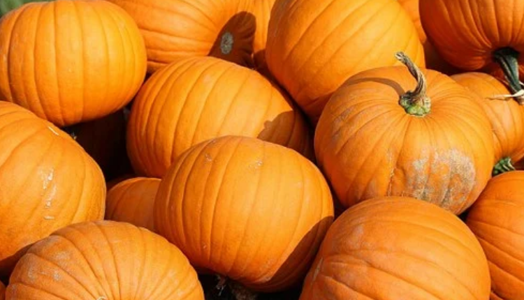 Eagle View Gardens and Haunted Trail Pumpkins